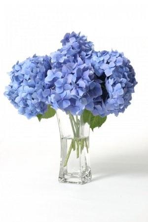 kvetiny-hortenzie.jpg