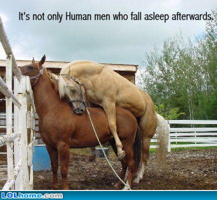 horse sleep.jpg