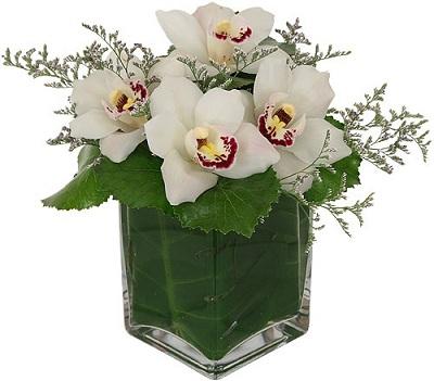 orchidea2.jpg