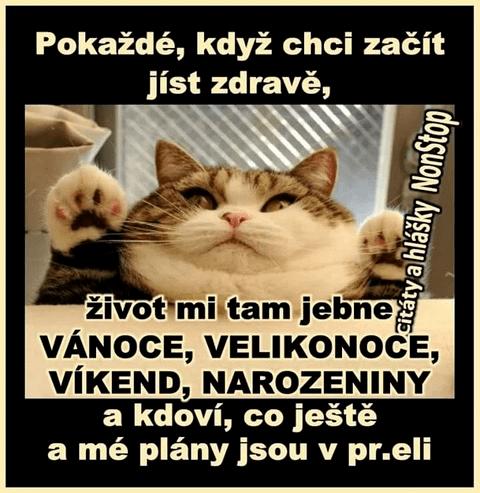 tučná cica2.png