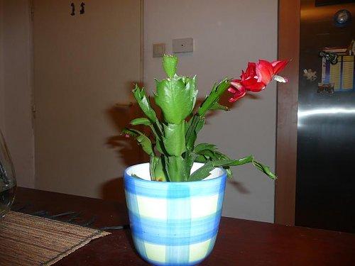 1 kaktus.JPG
