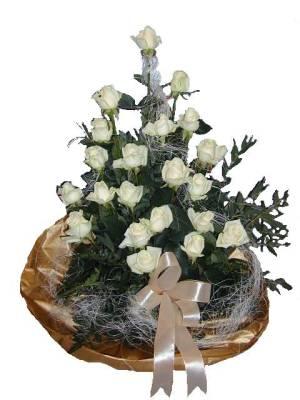 biele ruže.jpg