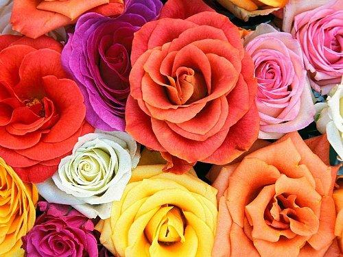kvet11.jpg