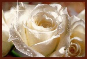 Biela ruža.jpg